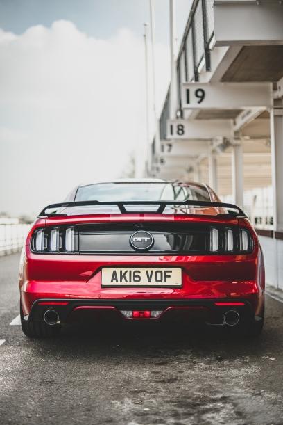 Mustang (2 von 8)