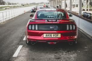 Mustang (3 von 8)